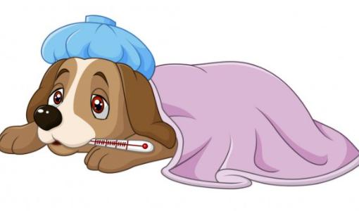 vacunación perros